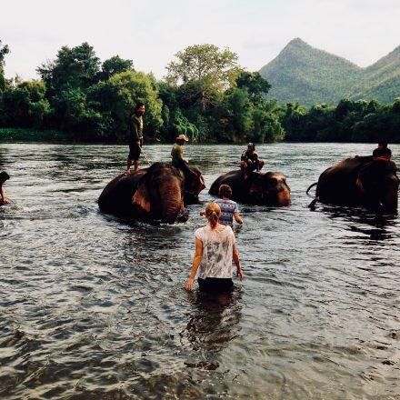 Elephants World – Zu Gast bei Elefanten