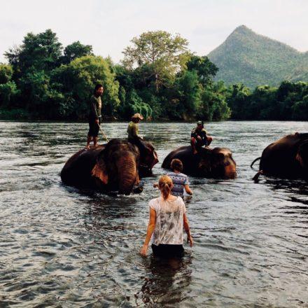 Elephants World Kanchanaburi – Zu Gast bei Elefanten