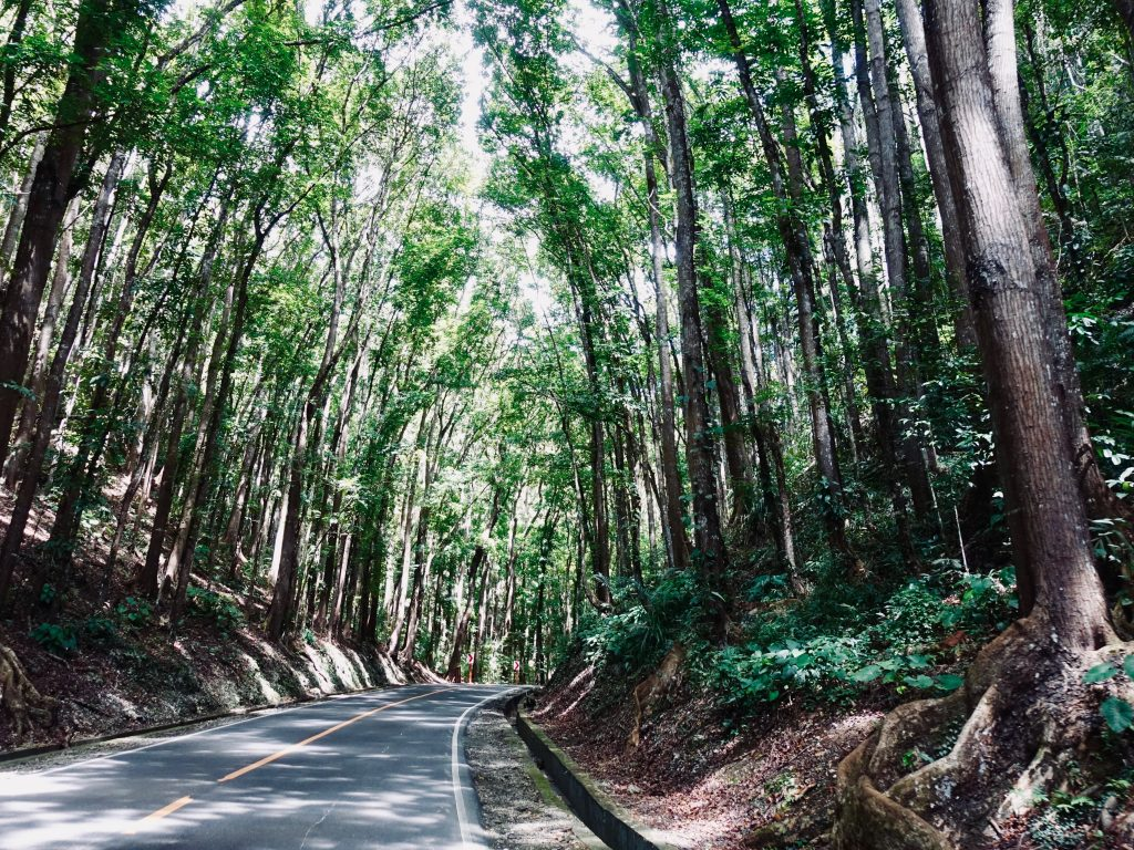 Philippinen Route Man made forest